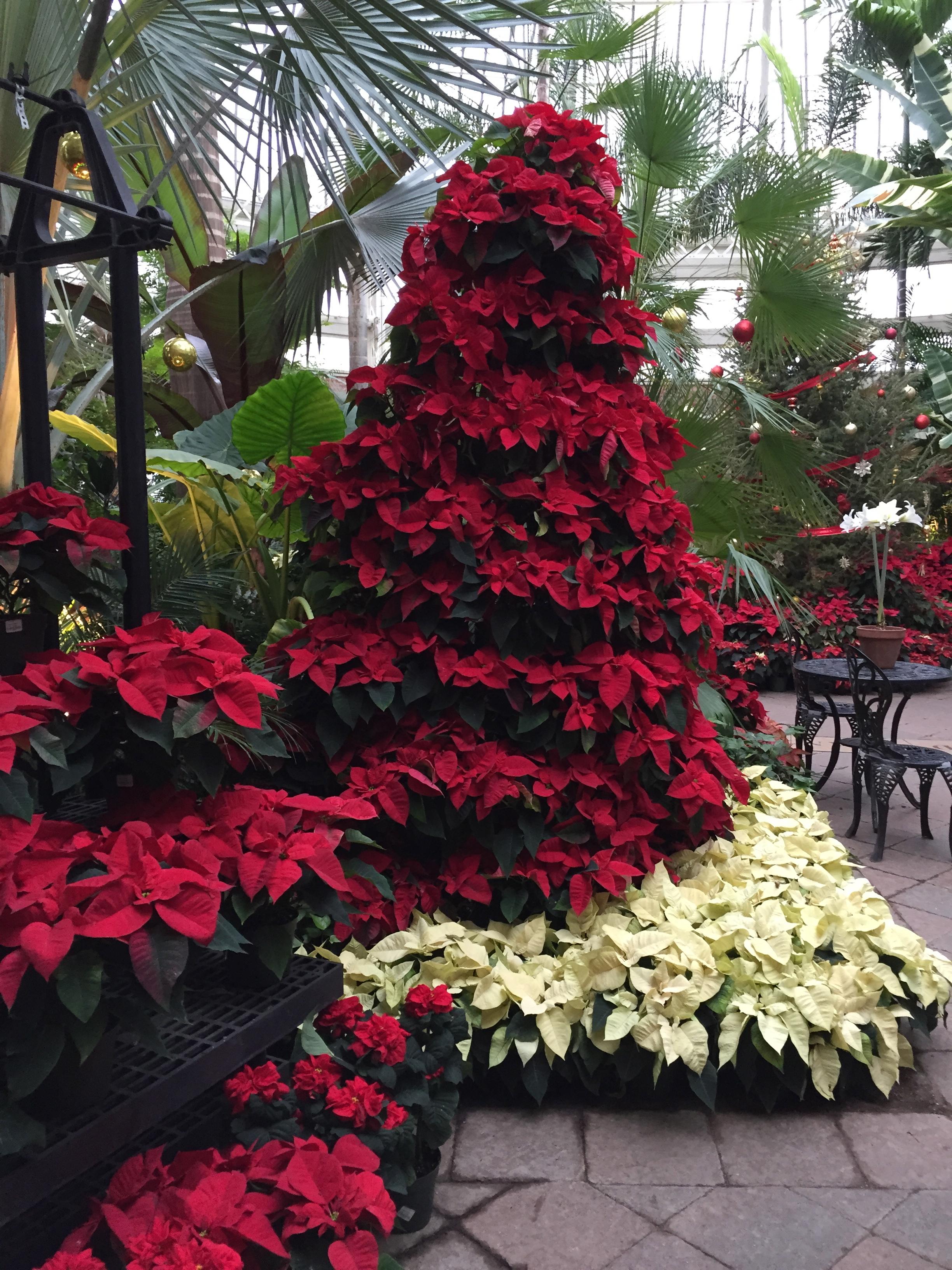 Christmas at Buffalo Botanical Gardens