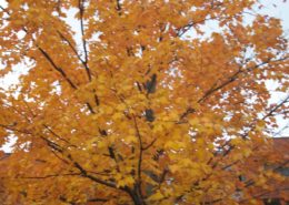 Fall Leaves Change of Season - Change is Good