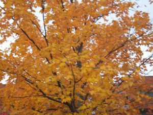 Fall Leaves Change of Season - Change is Good